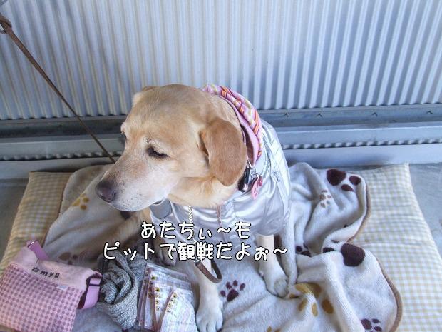 s-myu2008_1229(068)