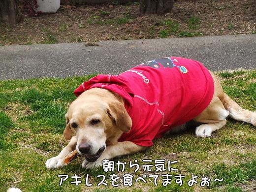 s-myu2009_0130(003)