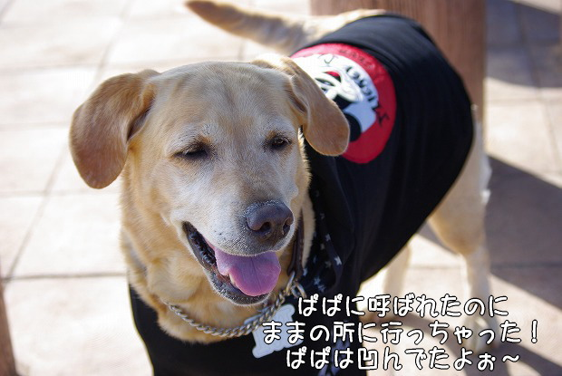 s-myu2009_0221(125)
