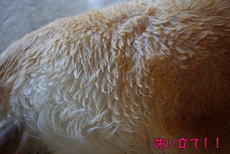 s-myu2009_0427(002)