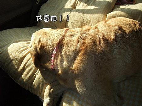 s-myu2009_0430(299)