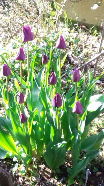いつもの春です