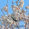 Photos: 春近し 隣は何をする人ぞ
