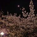 20200402 夜桜と半月