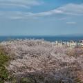Photos: 2020年 桜