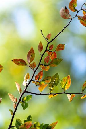 秋を待ちわびて