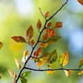 Photos: 秋を待ちわびて