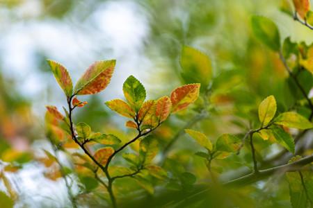 小さな秋みつけた