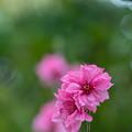 Photos: 春香り