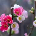 Photos: 放春花