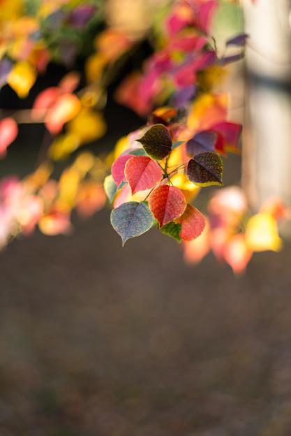 秋色を見つけに
