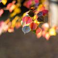 Photos: 秋色を見つけに
