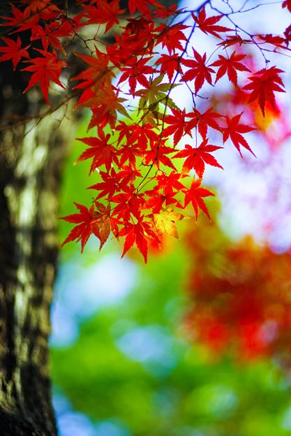 Photos: 秋灯り