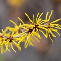 Photos: 春の息づかい