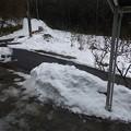 写真: 2月11日「雪中」