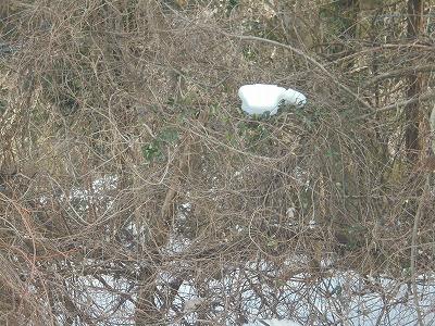 2月24日「樹上の残雪」