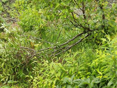7月3日「台風被害」