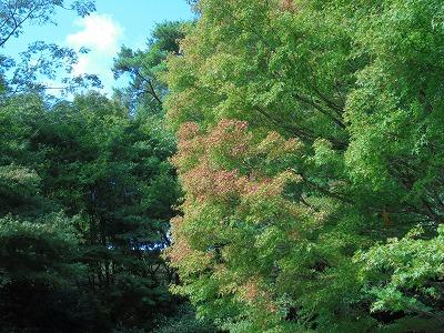 10月8日「紅葉開始」