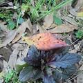 写真: 10月19日「枯葉」