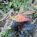 Photos: 10月19日「枯葉」