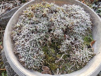 11月30日「降霜」
