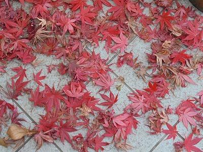 12月5日「落葉の美」