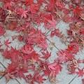 Photos: 12月5日「落葉の美」