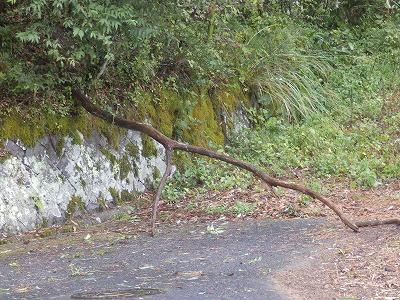 9月9日「朽木倒木」