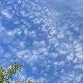 10月19日「羊雲」