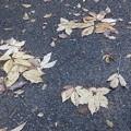 Photos: 11月11日「枯れ葉」