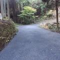 Photos: 11月12日「山の散歩道」