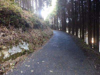 11月14日「山の散歩道」