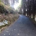 Photos: 11月14日「山の散歩道」