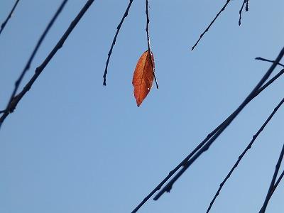 11月16日「一葉」