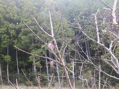 11月22日「梅の木」
