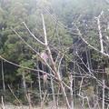 Photos: 11月22日「梅の木」