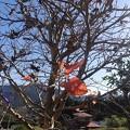 Photos: 11月25日「裸木」