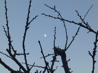 11月30日「裸木と月」