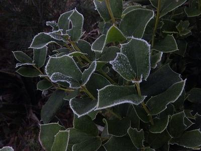 12月2日「霜」