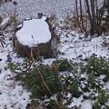 1月9日「雪模様2」