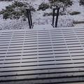 Photos: 1月11日「デッキ」