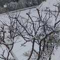 1月13日「杏に雪」