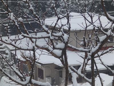 1月19日「杏に雪」
