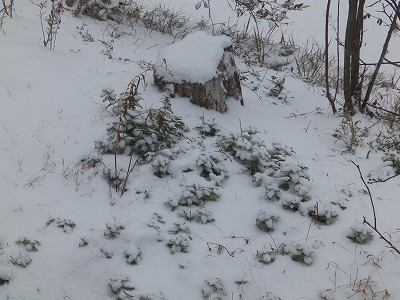 1月23日「降雪」