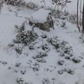 Photos: 1月23日「降雪」