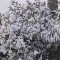 2月2日「積雪」