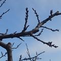 Photos: 2月6日「杏」