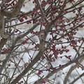2月20日「雪」