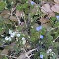 2月24日「春の兆し」