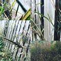 写真: 笹の花